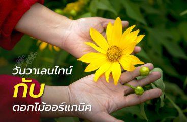 วันวาเลนไทน์ กับ ดอกไม้ออร์แกนิค เมื่อกระแสรักษ์โลกบุกมาถึงธุรกิจดอกไม้
